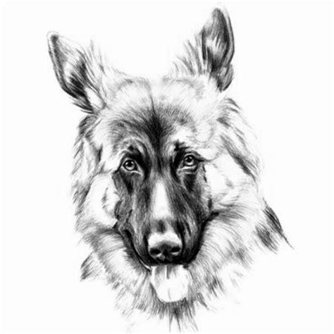 wzor tatuazu pies monika wypozyczalnia sprzetu