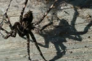 Boat Dock Spiders by Dock Spider Nightmare Cottage Tips