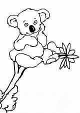 Koala Pages Coloring Cute Animal Printable Sheets Colouring Koalas Sheet Cartoon Clipart Bear Australia Print Activity Cliparts Outline Para Printables sketch template