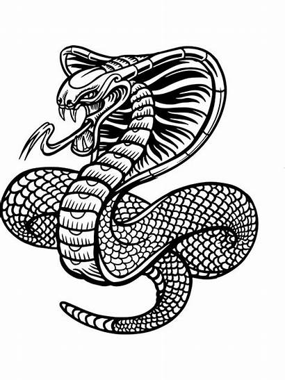 Coloring Pages Snake Zentangle Adults Adult Printable