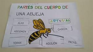 proyecto de las abejas para educación infantil