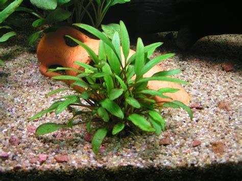 traitement algues brunes aquarium eclairage led page 2