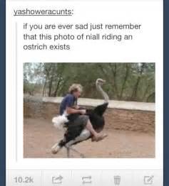 Niall Horan Tumblr Funny