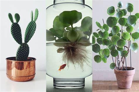 plante d intérieur originale en images 10 plantes d int 233 rieur rep 233 r 233 es sur