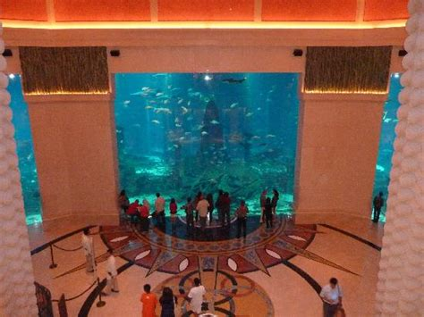 dubai hotel aquarium atlantis the aquarium picture of atlantis the palm dubai