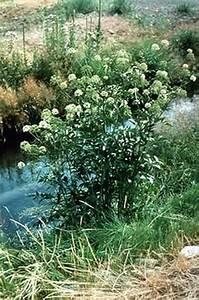 Range Plants Of Temperate North America