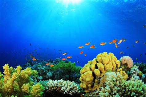 25 aquarium backgrounds wallpapers images pictures design trends