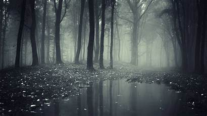 Forest Spooky Creepy Dark Wallpapers Definition