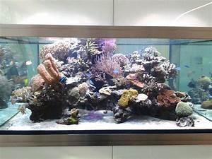 L Form Aquarium : meerwasseraquarien ~ Sanjose-hotels-ca.com Haus und Dekorationen