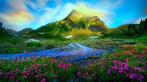 nature, landscape, spring