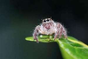 Larve Mite Alimentaire : comment lutter contre les insectes aries ~ Nature-et-papiers.com Idées de Décoration