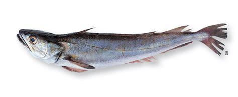 cuisiner du carrelet poissonnerie lachenal grenoble spécialiste du