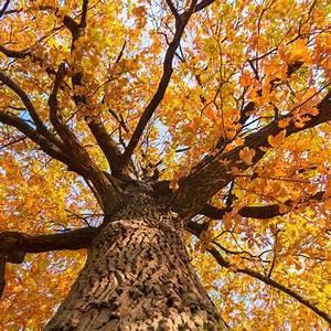 Ohio Fall Tree Care  The Definitive Guide To Fall Tree