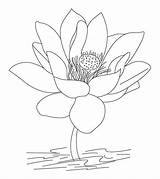 Coloring India Flower Lotus Countries Printable Momjunction Learn Toddler sketch template