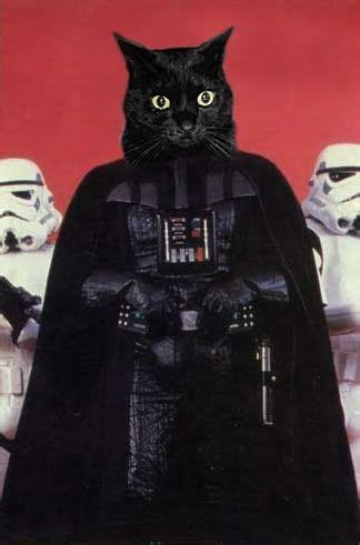 Katze Darth Vader by Darth Vader Cat My Favourite Pet
