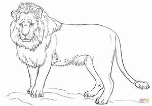 Standing Lion Coloring Page Free Printable Coloring Pages