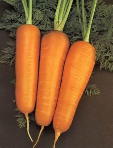 Verduras que mejoran la memoria alicia crocco for Envueltos de coliflor con zanahoria para enfermedades inflamatorias