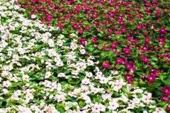 Lavendel Vermehren Wasserglas : flei iges lieschen vermehren so gelingt 39 s ~ Lizthompson.info Haus und Dekorationen