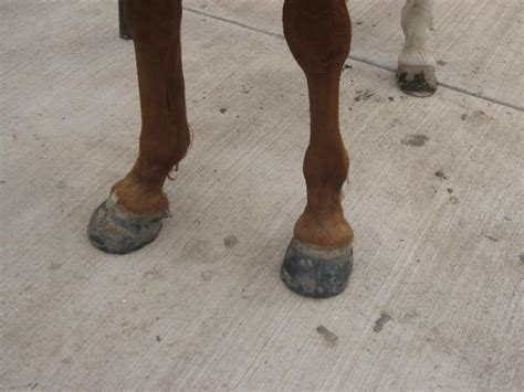 hoof glue easyboot condition boots mouth horse flaky easycareinc typepad horses