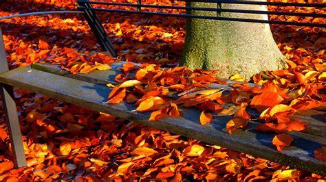 Ruduo,rudens miškas,rudenį vaikščioti,kritimo lapai ...