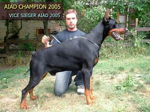Professional Dogs: Doberman Pinscher