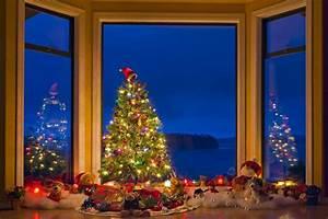 Free wallpaper background: Holiday Season Photo