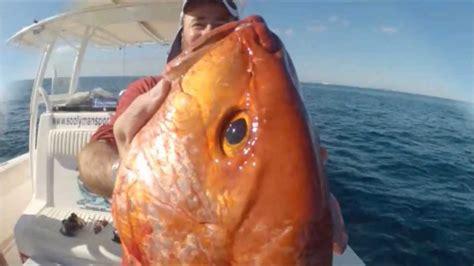 snapper uae fishing tuna fujairah gald grouper trevally
