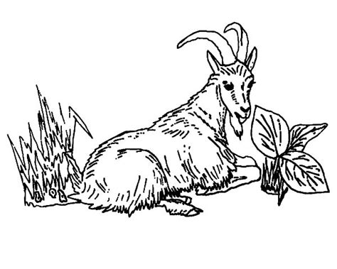 Mountain Goat Eating Grass Coloring Pages Flow Chart Word Excel Contoh Flowchart Pembuatan Website For Do Manufacturing Process Template Blank Luas Lingkaran Berangkat Sekolah Online Shop