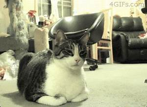 Cat Wtf GIF - Find & Share on GIPHY