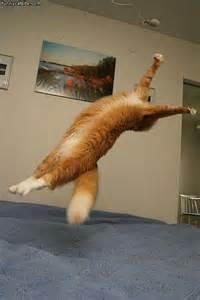 cat flipping cat backflip