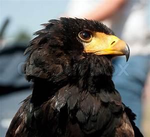 Wild bird with yellow beak | Stock Photo | Colourbox