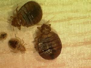 bed bugs and schools managing pests in schools us epa With bed bugs in schools