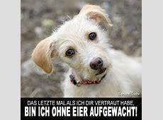 Kastrierter Hund Lustiger Spruch SprücheSuche