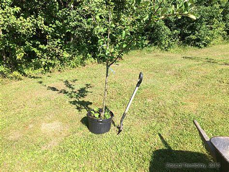 pommier planter des pommiers faire le trou de plantation