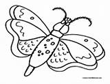 Moth Coloring Butterfly Moths Colormegood Animals sketch template