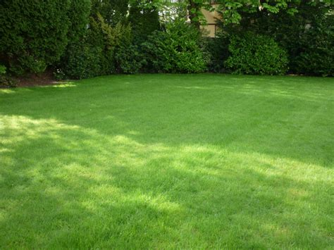 5 Tips For Choosing The Right Lawn