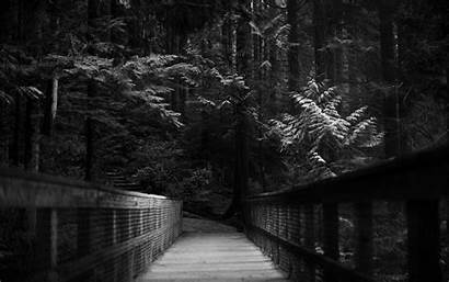 Dark Forest Moon Wallpapers Path Trees Monochrome