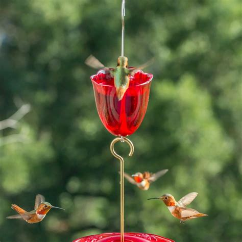 Bird Feeding Problem Solvers Hgtv