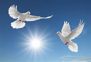 голуби, голубь, птицы, городская птица, Скачать Обои и Фото