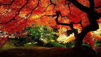 Tree Wallpapers Backgrounds Background Enjoyed Device Selection