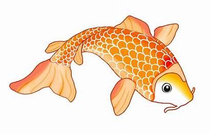 Koi Fish Orange Drawings Template Clip Colorful