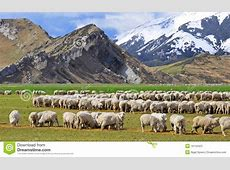 Sheep At Castle Hill, New Zealand Stock Image Image of