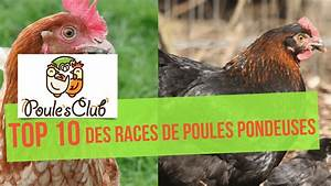 Poule Pondeuse Race : 10 races de poules bonnes pondeuses youtube ~ Dallasstarsshop.com Idées de Décoration