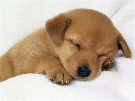 Make a Video For Sleepy Cute Dog. - Music Sharing For U