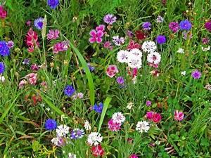 Ziergräser Für Den Garten : buntes ziergras f r den garten ~ Lizthompson.info Haus und Dekorationen