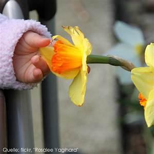 Was Sind Frühlingsblumen : sicherheit f r kleine kinder giftige fr hlingsblumen ~ Whattoseeinmadrid.com Haus und Dekorationen