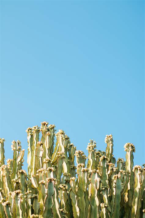 cactus plants   starry sky  stock photo