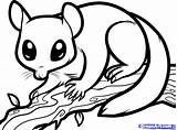 Glider Sugar Coloring Draw Nocturnal Possum Pages Animals Gliders Animal Step Clipart Drawing Colouring Dragoart Printable Drawings Sheets Aboriginal Opossum sketch template