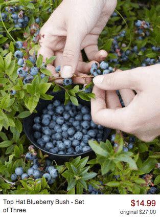 need help growing fruits veggies saving you dinero