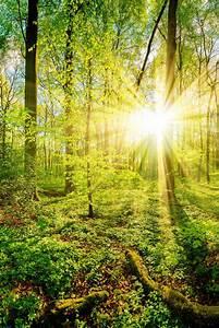 Bilder Vom Wald : fr hling im wald bei sonnenuntergang sonnenaufg nge und sonnenunterg nge in 2019 pinterest ~ Yasmunasinghe.com Haus und Dekorationen